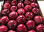 Việt Nam đã nhập khẩu trên 1.200 tấn táo từ Mỹ