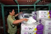 Phát hiện 23 tấn trái cây Trung Quốc thối