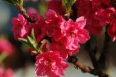 Nghệ thuật chăm sóc sắc đẹp từ hoa chơi Tết