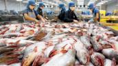Sản lượng cá tra tăng mạnh