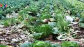 Nghệ An: Giá rau sạch giảm mạnh