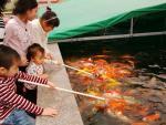 """Cá """"bú bình"""" đã xuất hiện ở Việt Nam"""