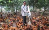 Chăn nuôi thay trồng lúa, lãi hàng trăm triệu mỗi năm