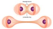 Cơ chế gây ung thư của những tế bào trong cơ thể