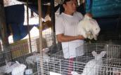 Cử nhân công nghệ về quê nuôi thỏ New Zealand