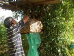 Nhộng ong núi Quảng Nam: Làm món gì cũng ngon