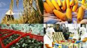 Arab Saudi từ chối nhập khẩu nông, thủy sản Việt Nam