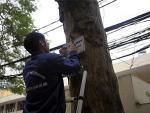 Treo biển trưng cầu ý dân về chặt cây