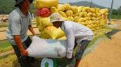 Đã tạm trữ 600.000 tấn gạo
