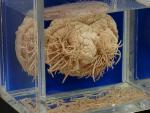 Dựng tóc gáy xem bảo tàng ký sinh trùng ở Nhật Bản