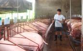 Tìm thị trường cho thịt sạch
