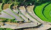 Lên Lào Cai, ngắm Sa Pa quyến rũ mùa nước đổ