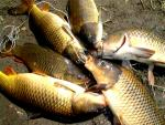 Ăn cá ở nguồn nước ô nhiễm - Khơi nguồn ung thư