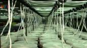 Sợi Polyester Việt Nam lại bị kiện chống bán phá giá