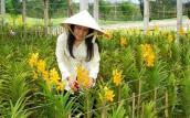 Loay hoay tìm giống tốt cho hoa lan