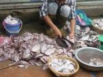 Bộ Y tế xác minh thông tin cá thối tại chợ đầu mối Dịch Vọng