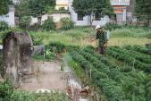 Ăn rau củ hay rau lá ít ô nhiễm thuốc trừ sâu hơn?