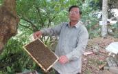 """""""Ong chúa"""" của 100 đàn ong mật"""