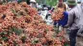 Xuất khẩu 500 tấn vải thiều sang Trung Quốc