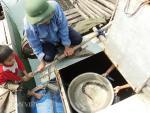 Kì diệu nghề nuôi loài cá có tên trong Sách đỏ Việt Nam