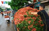 Tiêu thụ nông sản: Liên kết chặt chẽ giữa chuỗi sản xuất và người dân