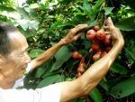 Lo Trung Quốc ngừng mua nhưng vẫn phải trồng