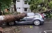 Ô tô bị hư hỏng vì siêu dông tại HN có được bồi thường không?