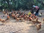 Một con gà cõng 14 loại phí: Bộ trưởng Nông nghiệp thực hiện lời hứa