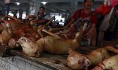 Lễ hội thịt chó làm dấy lên nỗi sợ bệnh dại bùng phát