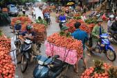 Vải đỏ đường Bắc Giang, nông dân bị ép giá