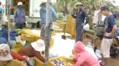 Phú Yên: Hải sản rớt giá, ngư dân chịu thiệt hại