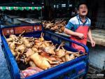 Hình ảnh kinh hoàng ở lễ hội thịt chó, nơi ủ mầm bệnh dại