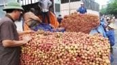 Bắc Giang: Đã tiêu thụ hơn 130.000 tấn vải thiều