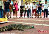 Tuyển dụng bằng thử thách hôn cá sấu tại Trung Quốc