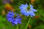 Chiêm ngưỡng hoa tình yêu làm siêu lòng giới trẻ