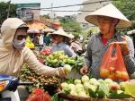 Đào Trung Quốc đội lốt đào Sapa tràn ngập thị trường