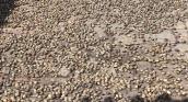 Thu gom hạt bàng bán cho thương lái
