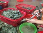 Bí quyết đơn giản phân biệt tôm bơm tạp chất và tôm sạch