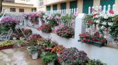 Mẹ trẻ trồng vườn ngập sắc hoa tại thiên đường Mộc Châu