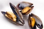 Món ăn từ trai, hến và những tác hại khôn lường