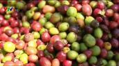Xuất khẩu nông sản chủ lực giảm trong 8 tháng đầu năm