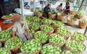 Cơ hội xuất khẩu trái cây đến hàng loạt thị trường khó tính