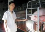 Chuyện lạ Đà Nẵng: Người chịu nóng, lắp điều hòa cho lợn