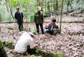 450 triệu USD trồng 19 ngàn ha sâm Ngọc Linh