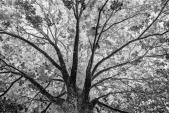 Những bức ảnh đảo lộn định nghĩa ánh sáng và bóng tối
