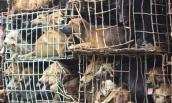 Dân nhậu Việt: Chén 5 triệu con chó mỗi năm