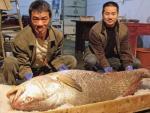 """""""Bật mí"""" thông tin ít biết về cá Sủ vàng giá tiền tỷ"""