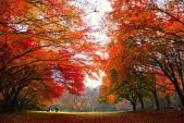 Vi vu Hàn Quốc, Đài Loan mùa đẹp nhất trong năm