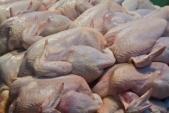 Cách phân biệt gà ta và gà Trung Quốc
