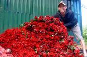 Hoa hồng Đà Lạt tăng giá gấp 2-3 lần ngày cận lễ